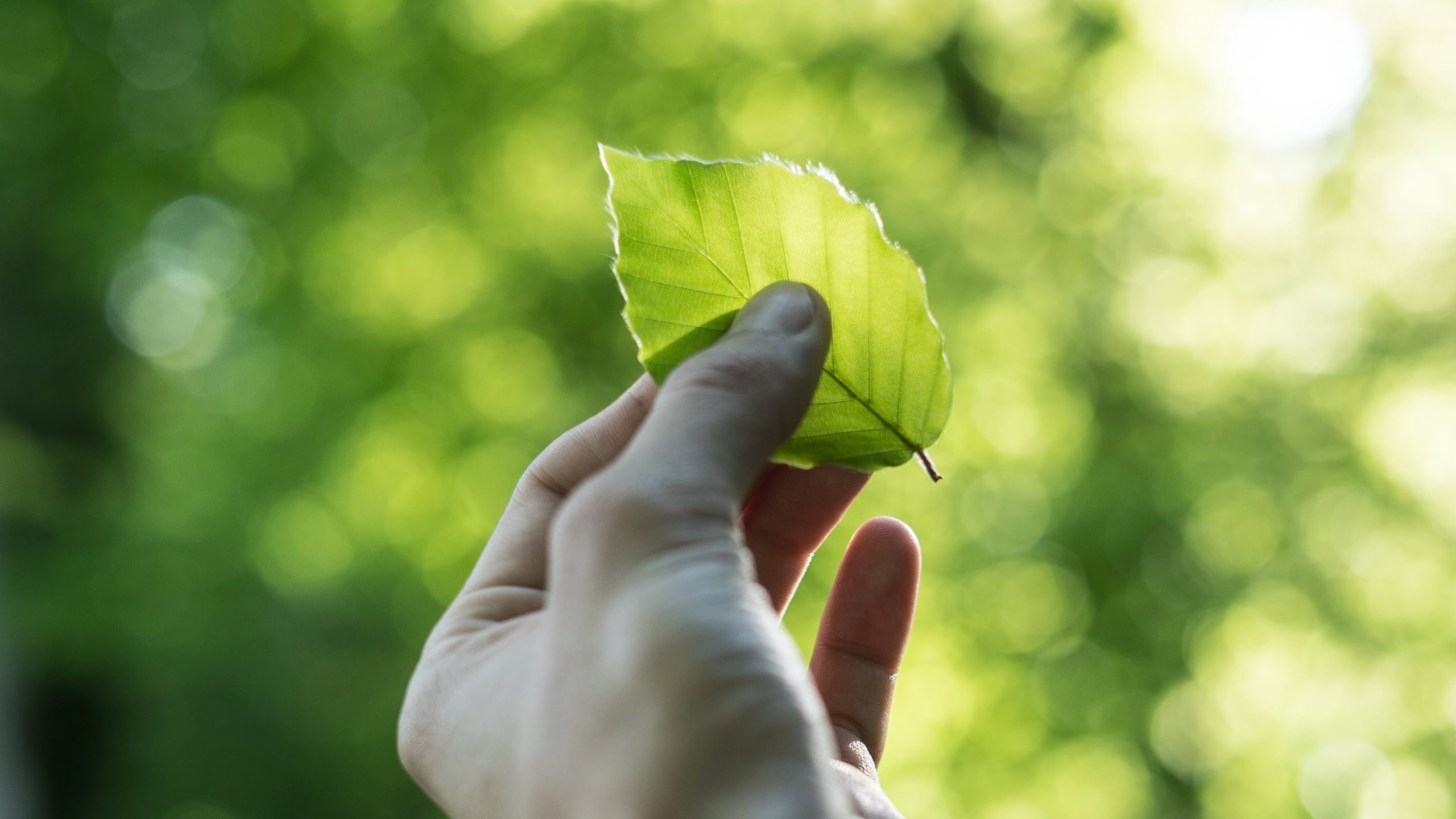 Environmental and Sustainability Consulting – Our Services